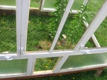 glasshouse #4 2016-05-17 011